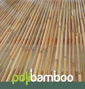 Komôrkový polykarbonát výplň bambus - 1/4
